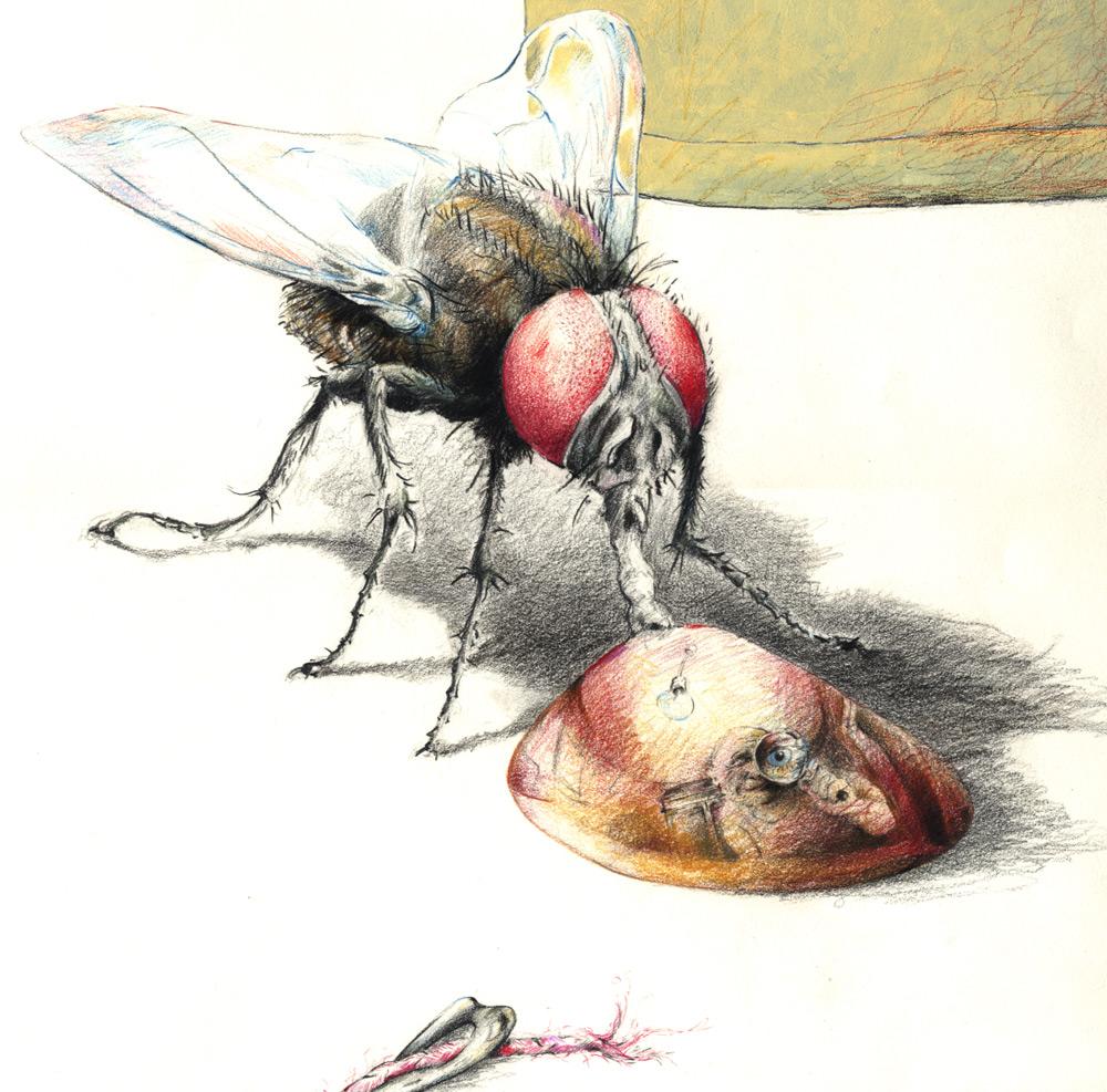 Fliege5-Detail